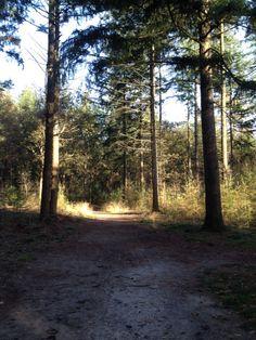 En op drie minuten lopen een heerlijk bos