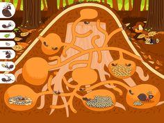 Mieren onder de grond