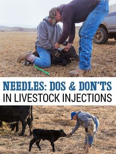A great resource to help you give vaccines or injections to your livestock, whether it's for a commercial cattle operation or a single dose to a dog, cat, or horse, you'll learn something. Ranch Farm, Ranch Life, The Ranch, Cattle Ranch, Cattle Farming, Goat Farming, Livestock, Beef Farming, Raising Cattle