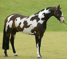 35 Unique Animals With Completely Bizarre Markings