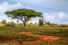 wedding location: under an acacia tree in Ethiopia, Africa.