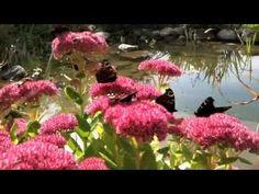 stillness within... Plants, Flora, Plant, Planting