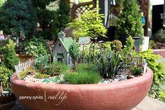 miniatures for fairy gardens | Miniature and Fairy Gardens / Bushnell Nursery