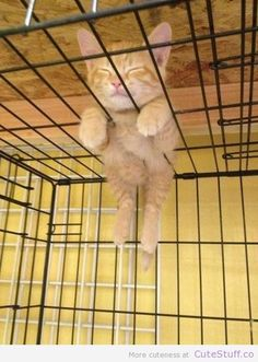 Kitten Just Hanging Around