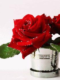 Flores em Jpg e Gifs Rosas Gif, Halloween Imagem, Gifs Lindos, Gato Gif, Rose Images, Love Rose, Beautiful Roses, Peace And Love, Red Roses