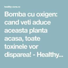 Bomba cu oxigen: cand veti aduce aceasta planta acasa, toate toxinele vor disparea! - Healthy Zone Natural Health Remedies, Home Remedies, Fitness Diet, Health Fitness, Arthritis Remedies, Metabolism, Herbalism, Health Care, Health And Beauty