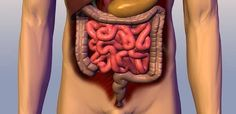4 Pasos importantes que tienes que saber para sanar tu Intestino y tu salud.