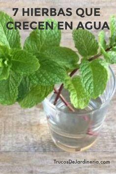 7 Hierbas Que Crecen En Agua Jardines Terrazas Y Plantas