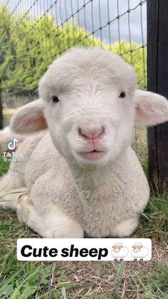 Cute Wild Animals, Cute Funny Animals, Farm Animals, Animals Beautiful, Animals And Pets, Animal Quiz, Carnival Of The Animals, Gato Gif, Animal Tails