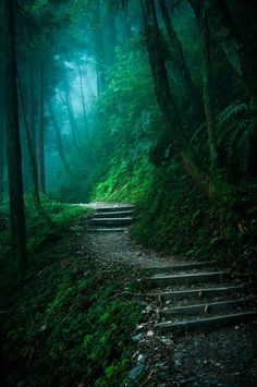 Let's wander into the woods & get lost forever Mysterious Forest by Hung Bo-Wen on Beautiful World, Beautiful Places, Beautiful Pictures, Beautiful Forest, Enchanted Wood, Forest Path, Blue Forest, Misty Forest, Forest Trail