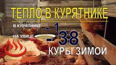 Почему в КУРЯТНИКЕ ЗИМОЙ ТЕПЛО ПРИ - 38 / Куры несушки зимой / Содержа...