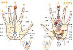人体図(筋肉) … | レディースファッション | 人体、人体…