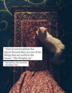 Quotes god islam prophet muhammad 37 ideas for 2019 Prophet Muhammad Quotes, Hadith Quotes, Muslim Quotes, Religious Quotes, Islamic Qoutes, Islamic Teachings, Islam Hadith, Allah Islam, Islam Quran
