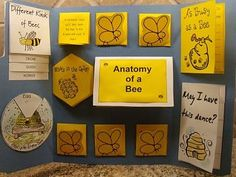 Material proyecto escolar abejas