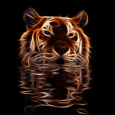 GIFS: 38 Imágenes Animadas de Hermosos Tigres - 1000 Gifs
