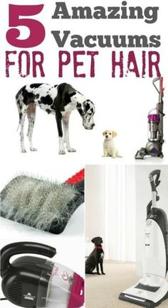 Pet Hair BE GONE! 5 Amazing Vacuum Cleaners to tackle Pet Hair!