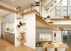 Install Shelves Just for Cats. Adding a cat-friendly, vertical dimension to your living space can make even a small area feel like a much bigger hang-out to your cat. Why pay $$$ for tacky cat furniture when you can add something that blends into your decor? This can be as simple as wood or MDF plank + nice wood veneer or carpeting + brackets. Put in an area you're not worried about them jumping off and into trouble; near windows would be ideal for most sun-worshipping, bird-watching…
