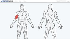 Pick a muscle, any muscle. http://greatist.com/move/this-cool-website-tells-you-exactly-how-to-work-any-muscle