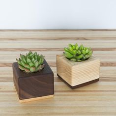 The Fillmore Succulent Planters - Hugo & Hoby Small Succulent Plants, Succulent Planter Diy, Small Plants, Propagating Succulents, Planting Succulents, Craft Projects For Adults, Diy Plant Stand, Plant Stands, Woodworking Inspiration