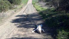 El viajero cansado | Las 100 fotos de perros más importantes de todos los tiempos