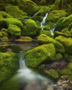 Still Creek, Oregon
