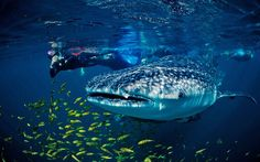 Jacques Cousteau once called Mexico's Sea of Cortez 'the world's aquarium',   but is its marine life still flourishing?