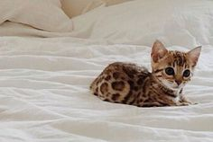 Would be the perfect cat please