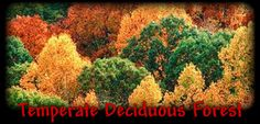 Autumn Leaf Color, Autumn Leaves, Temperate Deciduous Forest, Biomes, Ferns, Mushrooms, Drop, Yellow, Fall