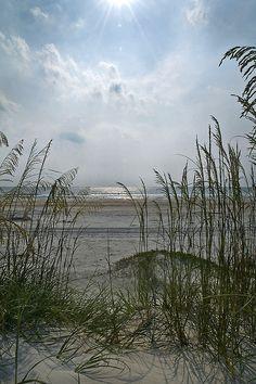 Seeing through the sea oats. Anastasia Park, St. Augustine FL