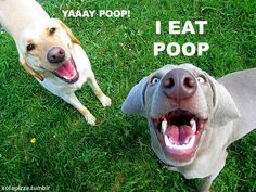 Okay, not me.  My dog, definitely.  The good thing about this is:  Cleaning up the yard in winter, when poo is hiding under the snow.  They sniff out the poo, you swoop in and steal it.  Haha!  No poopsicle for you!