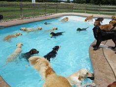 Piscina paraperros / Dog Pool