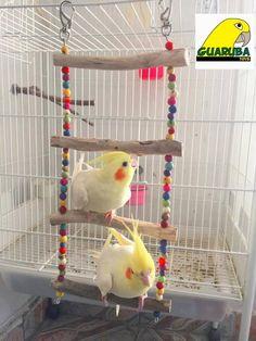 Homemade Bird Toys, Diy Bird Toys, Diy Toys, Diy Bird Cage, Bird Cages, Cockatiel Care, Diy Cockatiel Toys, Parakeet Toys, Bird Aviary