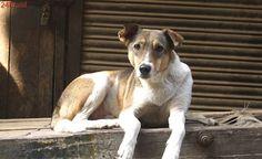 Abandono de animais nas ruas domina tema de debate público