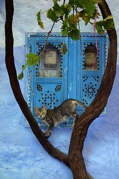 Médina Chefchaouen- Morocco