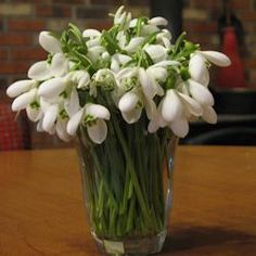 Snowdrop Bouquets contributed by: ColdClimateGardening