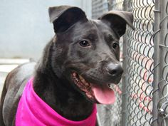 TO BE DESTROYED 05/24/14 Manhattan Center - P  My name is ELMYRA. My Animal ID # is A0999755. I am a spayed female black and white labrador retr mix. The shelter thinks I am about 3 YEARS old.  I came in the shelter as a STRAY on 05/13/2014 from NY 10027, owner surrender reason stated was STRAY. https://www.facebook.com/photo.php?fbid=804090976270450&set=a.611290788883804.1073741851.152876678058553&type=3&theater