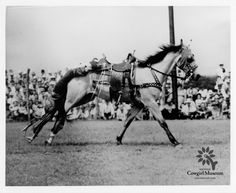 Photograph of Cowgirl Hall of Fame Honoree, Margie Roberts Hart, performing the Tail Drag on Buck, her favorite horse. Permanent Collection of the National Cowgirl Museum and Hall of Fame