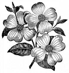 PenelopeRolland Botanicals Illustration Fashionillustration Flowers