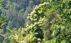 WAALWEG e UNTERER WAAL | SNOWCAMPITALY | I sentieri delle rogge (Waalwege) costituiscono un sistema di itinerari molto apprezzati nei periodi di calura estiva, in quanto corrono nella vegetazione lungo gli antichi canali d'irrigazione tuttora funzionanti. L'escursione anulare che raccorda il percorso superiore (Kuenser Waal) al percorso inferiore (Unterer Waal) rappresenta una vera e propria immersione nella natura selvaggia alla ricerca delle sensazioni primordiali. snowcamp.it