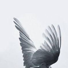 Find images and videos about black and white, angel and wings on We Heart It - the app to get lost in what you love. Angel Aesthetic, White Aesthetic, Ange Demon, Crescent City, Art Reference, Just In Case, Creatures, Fantasy, Black And White