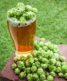 Hop Facts from the Homebrewers Association More