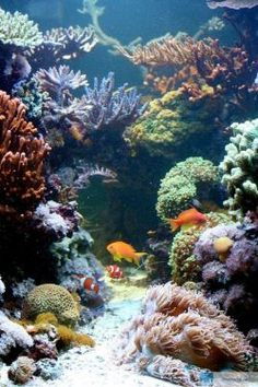 Der Traum von der Riffschlucht www.korallenriff.de