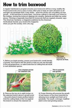 Garden Tips - How to trim a boxwood Now is the time to start looking after the lawn so this summer is beautiful. That's why I'm going to start explaining how to start keeping it. Boxwood Landscaping, Boxwood Garden, Garden Shrubs, Outdoor Landscaping, Front Yard Landscaping, Shade Garden, Lawn And Garden, Outdoor Gardens, Garden Tips