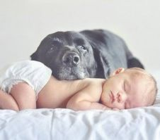 Introducing Your Fur Baby to Your New Baby - i think we've pinned a few of these, but maybe this has new tips for tillayyy