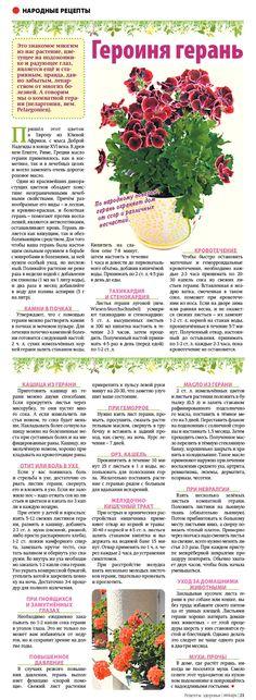 Garden Art, Garden Plants, House Plants, Small Farm, Natural Medicine, Life Hacks, Flora, Health, Nature