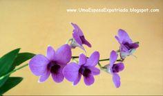 Orquideas - Tailandia