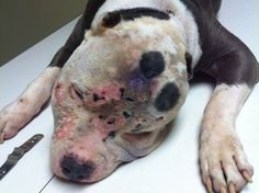 Man who tortured his dog is given maximum sentence - ordered to years in prison