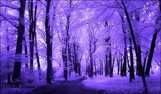 Purple trees infrared