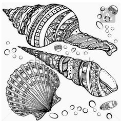 Zentangle Stock Photos, Images, & Pictures – Images) - Page 25 Zentangle Drawings, Mandala Drawing, Zentangle Patterns, Mandala Art, Zentangles, Shell Drawing, Painted Shells, Animal Coloring Pages, Shell Art