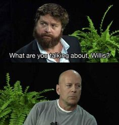 Only Zack Galifinakis could get away with this